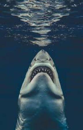 The Shark Faunus Returns: Shark Faunus Male Reader x RWBY Harem by OverlordAKX