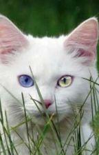 Warrior cat Lemons by Murkrow42069