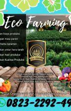 ✅DAPATKAN_0823*2292*4990. Eco farming untuk kelapa sawit Lima Puluh Kota by ecofarming