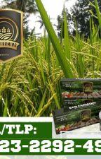 ✅LIMITED_0823*2292*4990. JUAL eco farming padi kirim Sarilamak by ecofarming