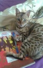 Tagebuch einer Katze by Eva_Unverbesserlich