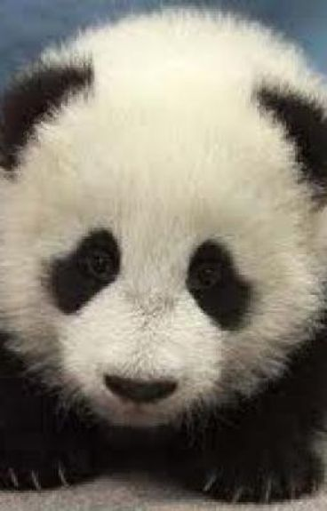 911 Operater: 911 what's your emergency. Me: There's a panda humping my leg! by GangstaKing
