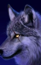 About Wolf Packs! by _-Mysterious-_