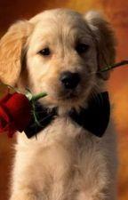 loyal (dog story) by AJaustria99