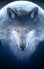 Artic Wolf Pack ~Members by BrittneyGraham4