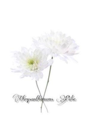 Chrysanthemums Pulse [TaeKook] by BHeeseCakeY