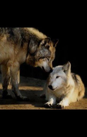 The Lost Wolf (boyxboy)