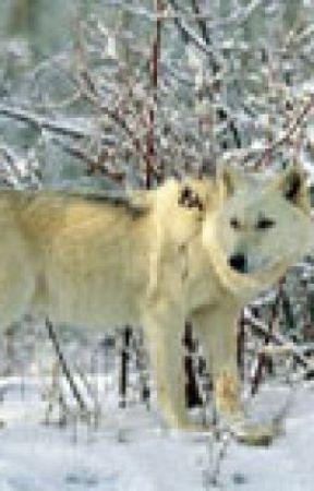White Wolf by mac272