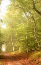 Der Waldweg by aknikalsam
