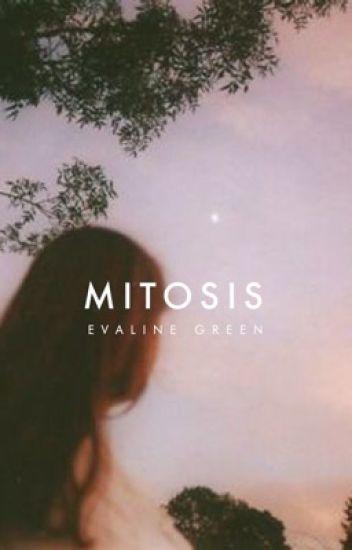 Mitosis ✓