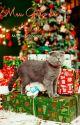 Meu Gato de Natal by mgama19