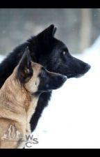Wolves destiny (ON HOLD) by OkamiPrince