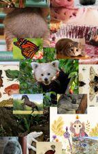 Imágenes, memes y cómics de animales by Yaqu11