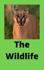 The Wild Life by avamichellecastillo
