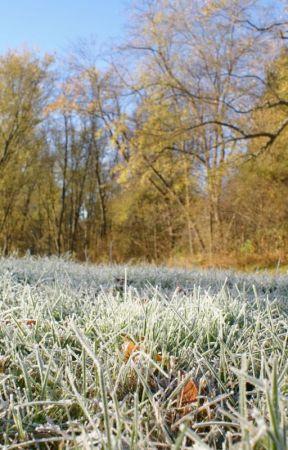 Frost on the Grass - Fell!Poth/Lurik by Fateistiedin_Crimson