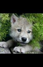 Gordan's Hybrid Adoption Center *on hold* by Wolf_lover2
