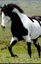 Horse Breeds by horses432