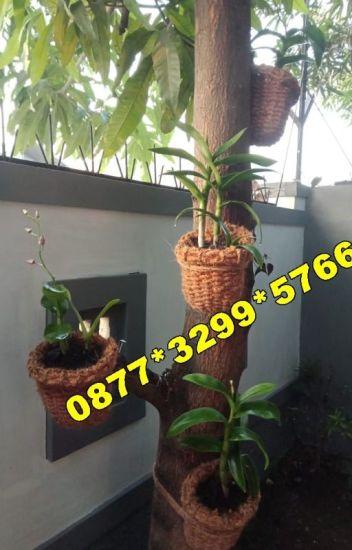 Diskon 0877 3299 5766 Jual Pot Anggrek Di Bandung Pot Anggrek Unik Grosir Pot Anggrek Wattpad