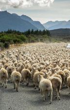 Don't be a sheep  by Rodc91