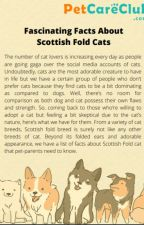 Fascinating Facts About Scottish Fold Cats by Petcareclub