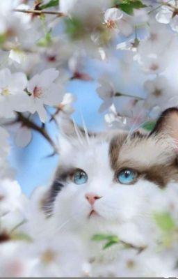 [Jensoo] Say Đắm Một Nàng Mèo