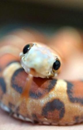 Cute Snake Pics by Cats_4_Life_