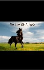 The Life Of A Horse by SkayaM