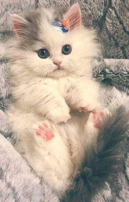 Đọc truyện kitten - kookv//kooktae