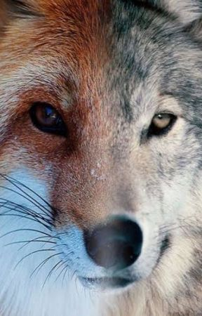 As Swift as a Fox, as Red as a Wolf. {|| Therian Journal! ||} by KodaTheTherian