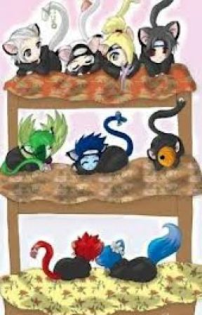 akatsuki and naruto characters are......WTF CATS!!!!!!!!!!!!!!! by roselyuchiha