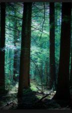 L'ombre de la forêt noire by rosaliefigureskater