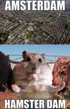 i am hamster by JisooJungkookXx