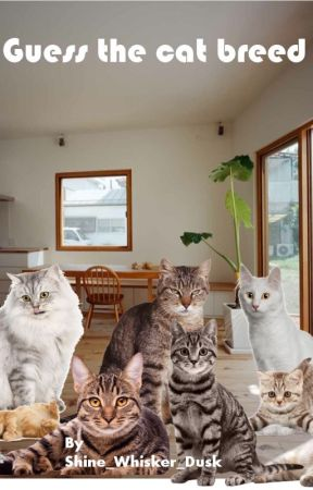 Guess the cat breed by Mosswind