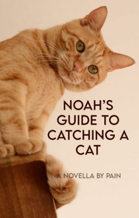 Noah's Guide to Catching a Cat by AntagonistPains