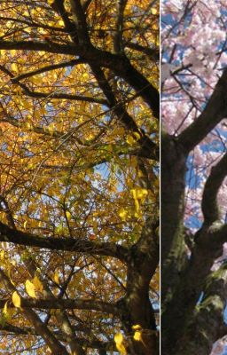 Arhi TS: Of Autumns and Springs !!