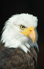 HOTE: Home of the Eagles Part 5 (Final Installment) by wpina1997