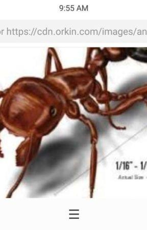 Ants 1 Wattpad