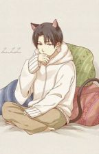 You're Like Catnip {Neko!Levi x Reader} by MissCielPhantomhive