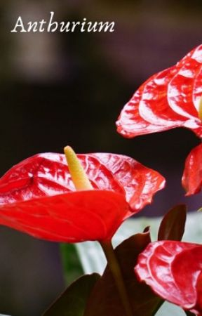 Anthurium (Completed) by MissCandy-Apples