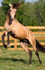 Golden Avanti Midnight by kay_maybe_a_horse