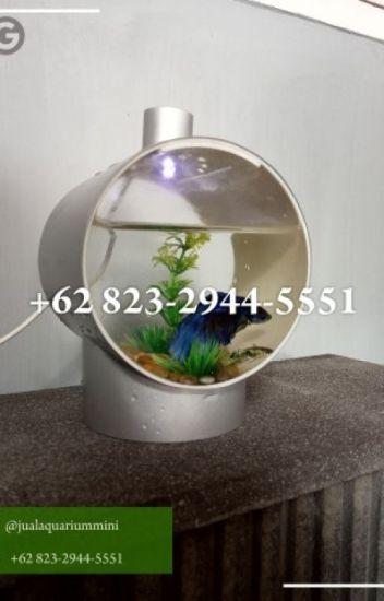 Promo 62 823 2944 5551 Aquarium Ikan Cupang Dari Paralon 62 823 2944 5551 Aquarium Minimalis Wattpad