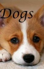 Dogs by thinknaturally