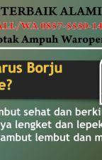 TERBAIK ALAMI, CALL/WA 0857-5550-1411, Obat Botak Ampuh Waropen Papua by agenpelebatbiak