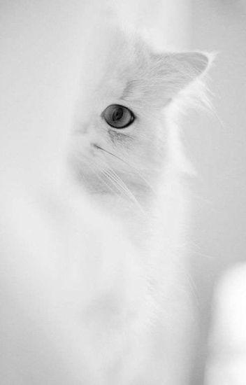 MY LOVE IS A BEAUTIFUL CAT (I Agápi Mou Eínai Mia Ómorfi Gáta) ON GOING