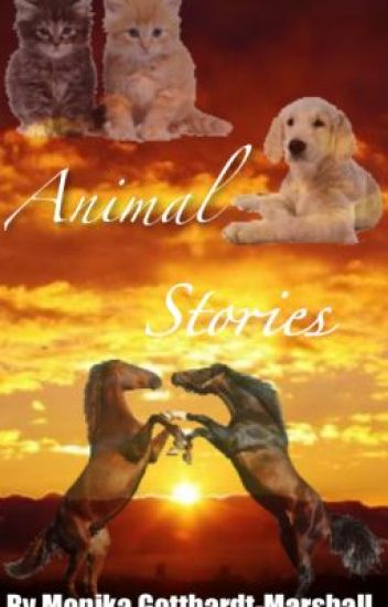 Stories From The Animals P.O.V