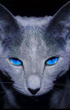 Storie di gatti by grafios