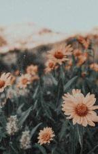 Flower Field「 Ranpoe 」 by iihxneyy_m00n