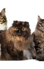 wiki for my cats (kitclan) by yuvali1234