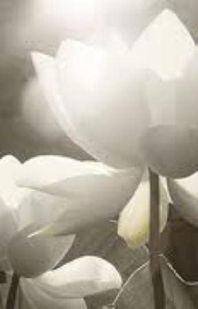Love Letters To Lotus Flower Wattpad