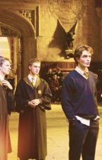 the slytherin & the hufflepuff   cedric x reader by dr4cosw1fe